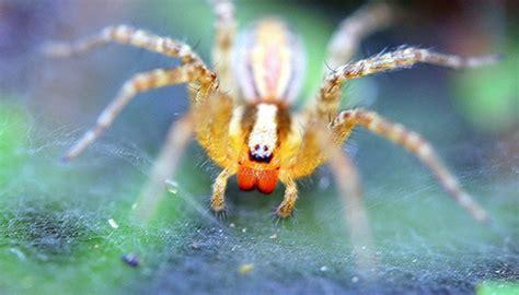Garden Spider Pacific Northwest Indentification Of Pacific Northwest Spiders Sciencing