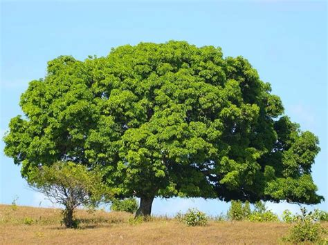 wallpaper green tree hd big green tree hd new wallpapers free downoad hd walls