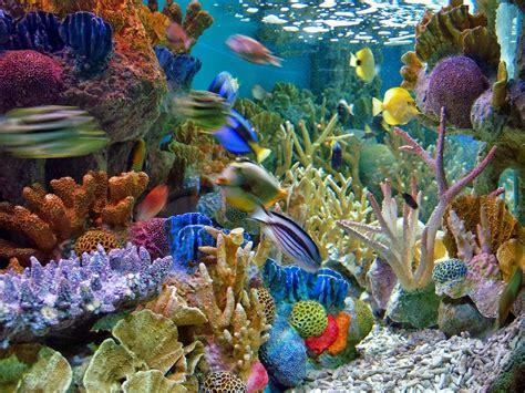 Aquarium Hiasan Dasar Bintang Laut gambar pemandangan di dasar laut image gallery photogyps