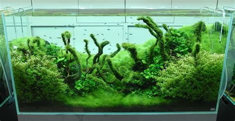 aquascape inspiration nature aquariums and aquascaping inspiration