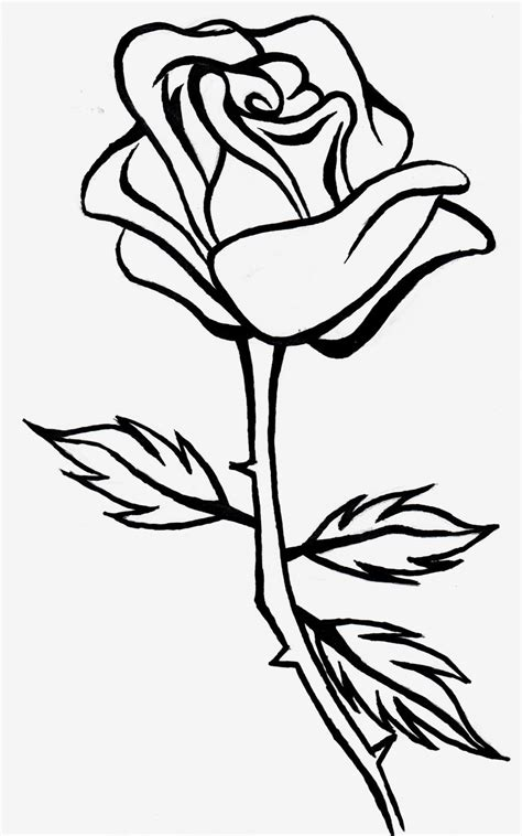 rose line drawing www pixshark com images galleries