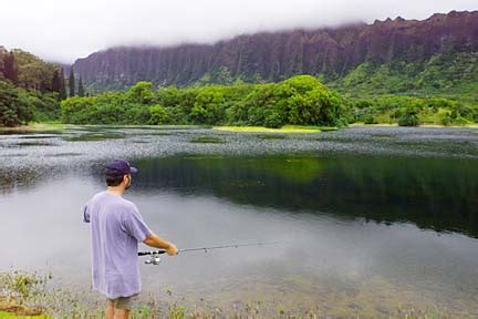 Hoomaluhia Botanical Garden Fishing Honolulu Bulletin News