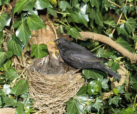 birds and their nests