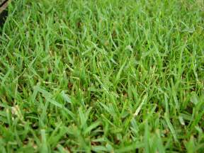 the 4 best grass types for sandy soils virginia beach va