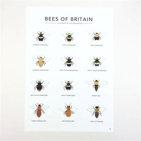 Original Reg A Free Used Bee bees of britain print by kate broughton notonthehighstreet