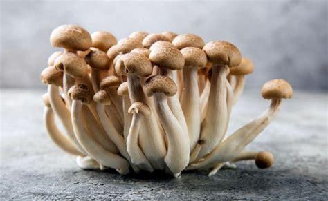 jenis jamur  bisa dimakan  bernutrisi