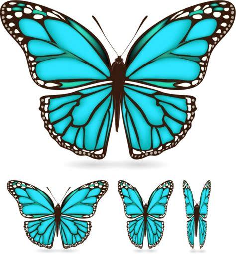 imagenes mariposas turquesas t 252 rkis schmetterling download der kostenlosen vektor