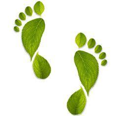 imagenes huellas verdes m 225 s de 1000 im 225 genes sobre huellas en pinterest