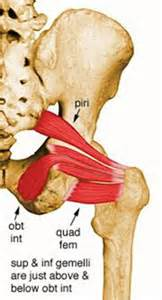 Purpose stretch the piriformis muscle to correct externally rotated