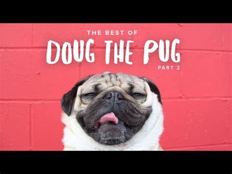 doug the pug website v 237 deo de lo mejor de doug the pug