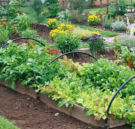 fall vegetable garden planting a fall vegetable garden home energy store