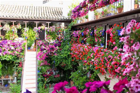 Cordoba Patio Festival by Discover Quot Los Patios De Cordoba Quot Festival Of Flowers And