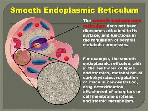 Smooth Endoplasmic Carcinogenic Detox by Cell Structure Unit 4 Chapter Ppt