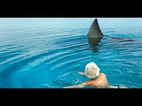 fishing boat attacked by shark megalodon best 20 megalodon shark videos ideas on pinterest