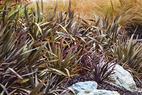 bronze foliage plants the 10 best bronze foliage plants for your garden stuff