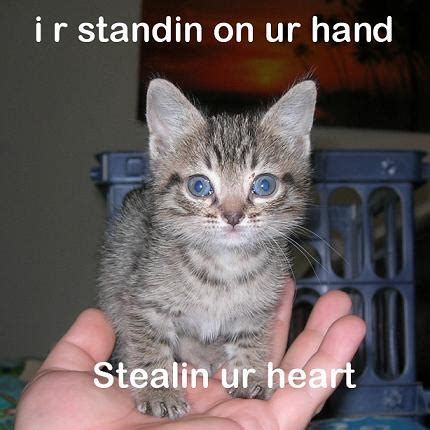 Lolcat Meme - the ultimate meme gallery lolcats 1