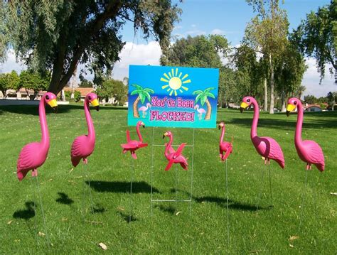 pink flamingos in the front yard pink flamingo review the pink flamingo