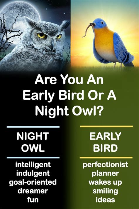 A Or Are You An Early Bird Or A Owl