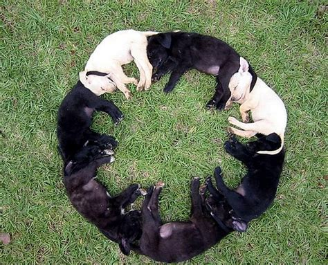 Circle Dogs circle picture of sleeping dogs
