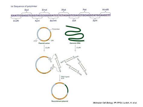 libreria genomica tema 8