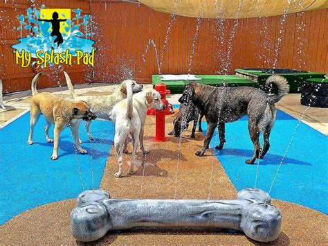 puppy pad spray water park features for your splash pad by my splash pad