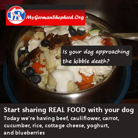 Cottage Cheese For Puppies by Daily Meal Real Food Suggestions Mygermanshepherd Org