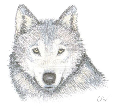 Drawing Wolf by How To Draw A Wolf Easy