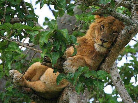 queen elizabeth national park uganda wildlife discovering the wildlife of queen elizabeth national park
