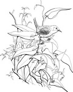 yellow jessamine coloring page house wren coloring page supercoloring com