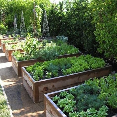 Elevated Vegetable Garden Advice For Raised Bed Vegetable Growers