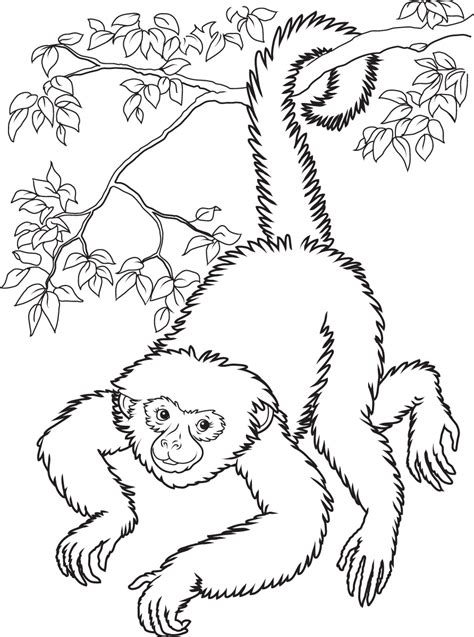 Free Printable Monkey Coloring Pages For Kids Coloring Page Monkey