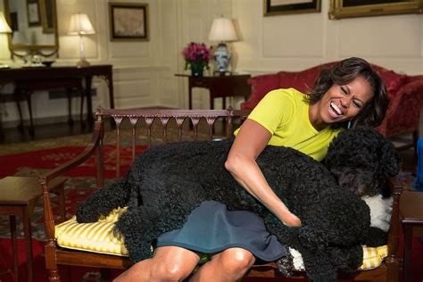 white house dogs names president obama s dog sunny presidential pet museum