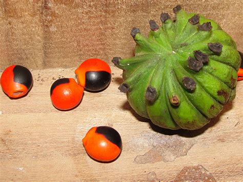4 fruits to never eat what are the 10 must do in costa rica
