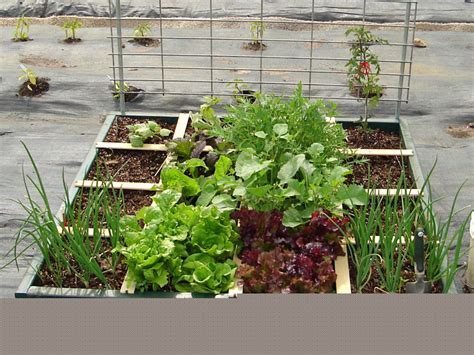 square foot container gardening square foot gardening at milk and honey farm