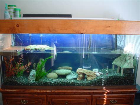 aquarium design for turtles turtle tank setup large turtle tanks for sale 2017