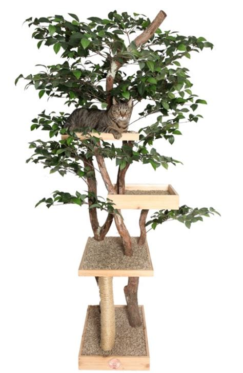 real tree or fake foe cats cat tree houses real cat trees with leaves