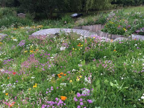 wildflower turf blog wildflower meadow turf web log