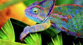 chameleon changing color wow science gives us e skin that changes colors like a