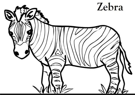 coloring pages for animals vbs 17 best images about vbs jungle safari on