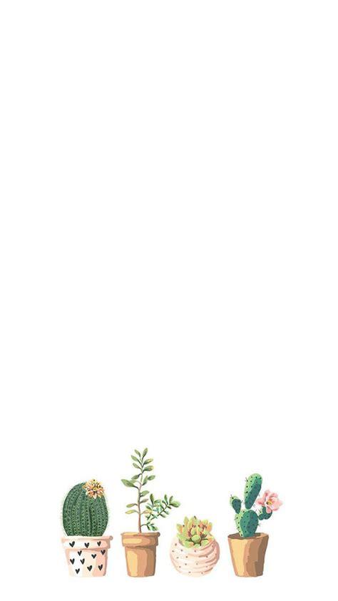 wallpaper iphone cactus cactus hd desktop wallpaper instagram photo