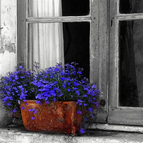 window sill boxes 169 best garden ideas images on
