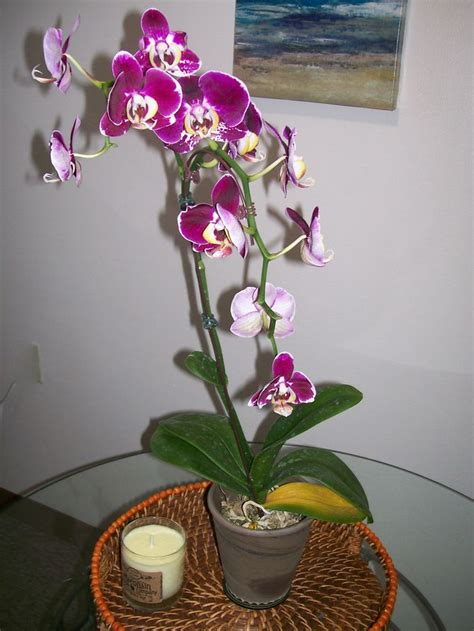 care of orchids after flowering how to care for orchids 14 steps with pictures wikihow