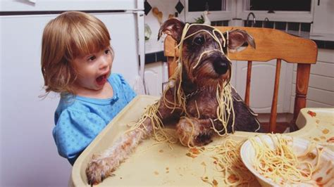 can dogs eat spaghetti can dogs eat pasta reference