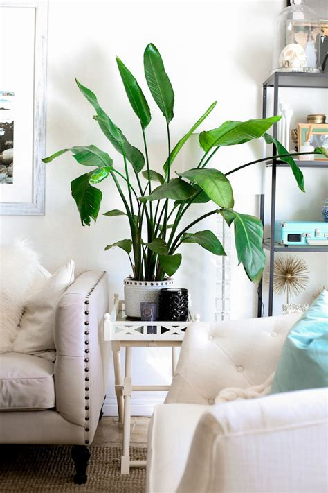 How To Keep Flowers In A Vase Alive Longer Tips For Keeping Plants Alive