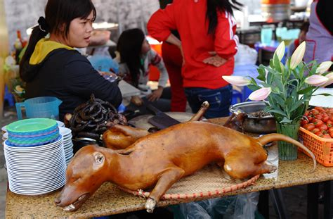 do japanese eat dogs food www pixshark images galleries with a bite