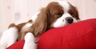 puppy breathing fast while sleeping why do dogs infographic barking royalty