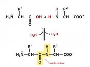 proteinas o que sæo desconversa o que s 227 o lip 237 dios prote 237 nas e vitaminas