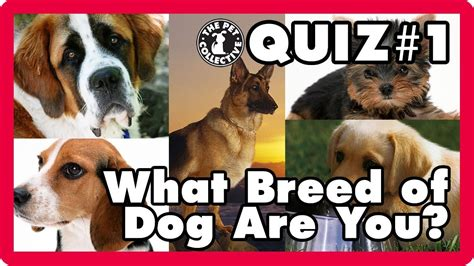 what breed of are you what breed of are you quiz