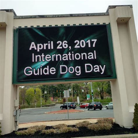 international puppy day 2017 international guide day guide users of the empire state