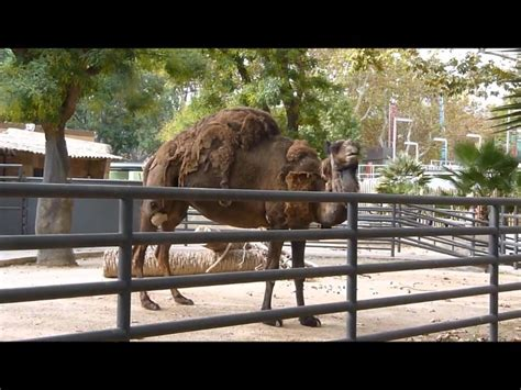 fotos animales zoo barcelona zoo de barcelona muchos animales wmv youtube